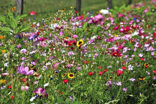 metsikud lilled värske lõhn
